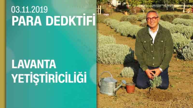 Büyükçekmece'deki lavanta üreticilerin hikayesi - Para Dedektifi 03.11.2019 Pazar
