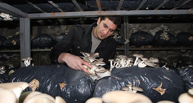 Mantar üretimine hobi olarak başladı, ayda 2 ton üretime rağmen siparişlere yetişemez oldu