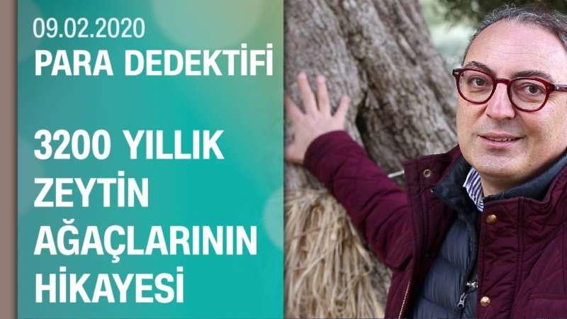 Cem Seymen, 3 bin 200 yıllık zeytin ağaçlarının hikayesini anlattı - Para Dedektifi 09.02.2020 Pazar