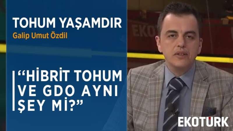 BUĞDAY GDO'LU MU?   Galip Umut Özdil   Prof. Dr. Seydi Ahmet Bağcı