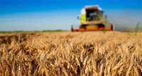 2020 küresel tahıl üretimi beklentileri olumlu seyrediyor