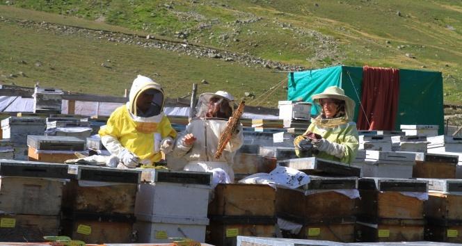 Dünyaca ünlü Anzer Balı üretimi tehdit altında