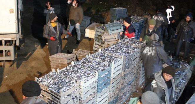 Limana yüzlerce kasa hamsiyle döndüler: Kilosu 8 liraya indi