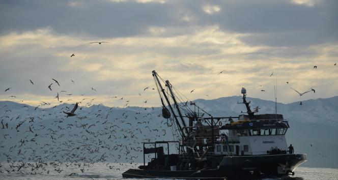 Karadeniz'de her yıl yaklaşık 1 milyon ton hamsi, yanlış avcılıkla yok oluyor