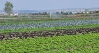 Türk kurutulmuş sebzeleri dünyayı fethediyor