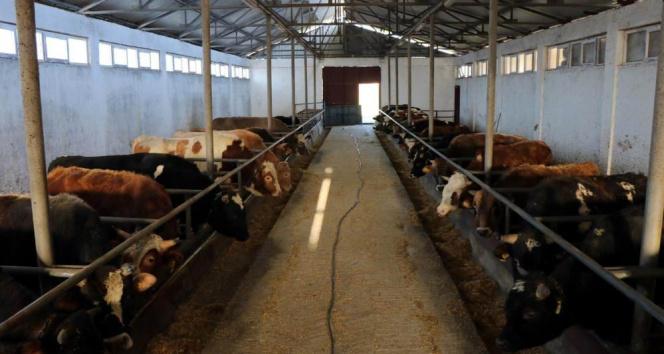 Hayvan pazarları 1 Haziran'da açılıyor
