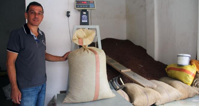 Tam kapanmanın ardından fındık fiyatı 22,75 liradan işlem görmeye başladı