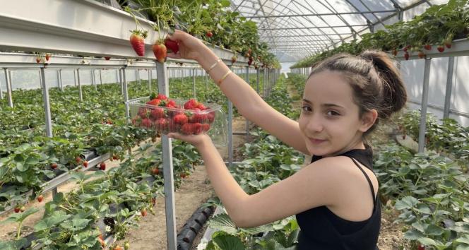 Topraksız tarım ile çilek üretimini 3'e katlıyor
