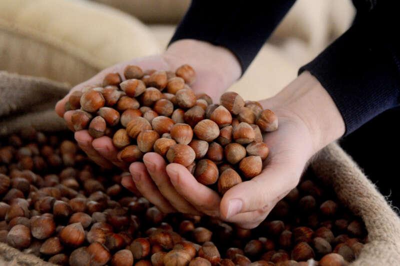 AB ülkelerine 299 ton 300 kilo fındık ihraç edildi