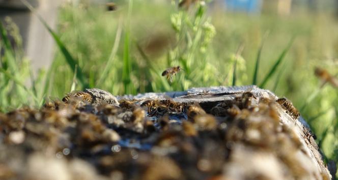 Ardahanlı arıcıların kuraklık endişesi