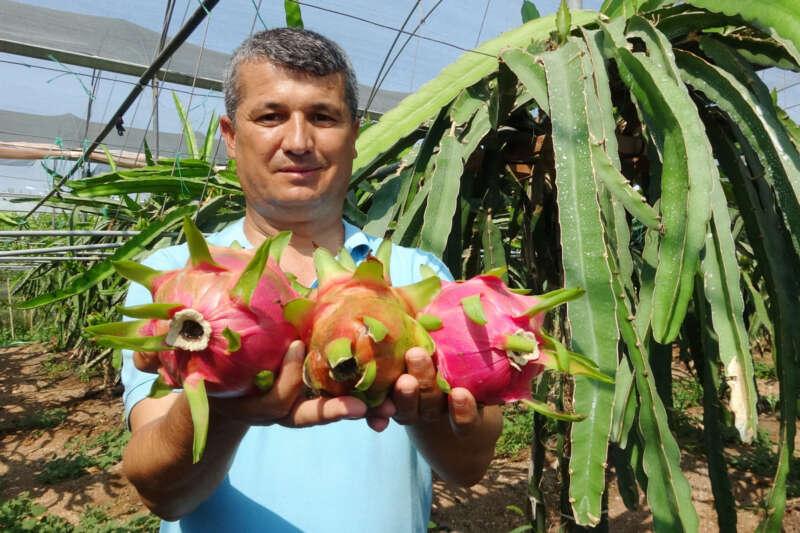 Babası için ejder meyvesi yetiştirdi, şimdi ihraç ediyor