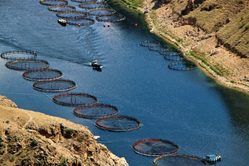 Elazığ'da üretilen 21 bin ton alabalık, 25 Avrupa ülkesine ihraç ediliyor
