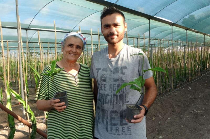 Hayvan yemi ektikleri tarlayı tropikal meyve üretim merkezine çevirdiler