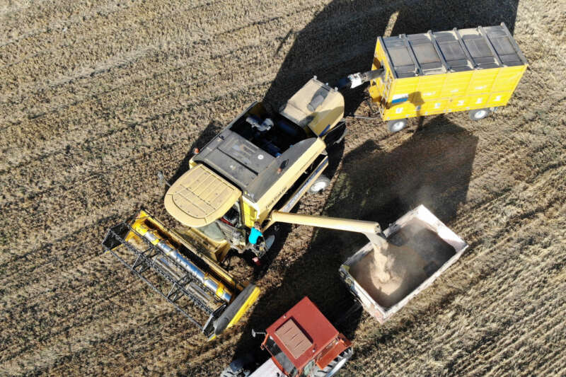 Tokat'ta buğday rekoltesinde artış bekleniyor