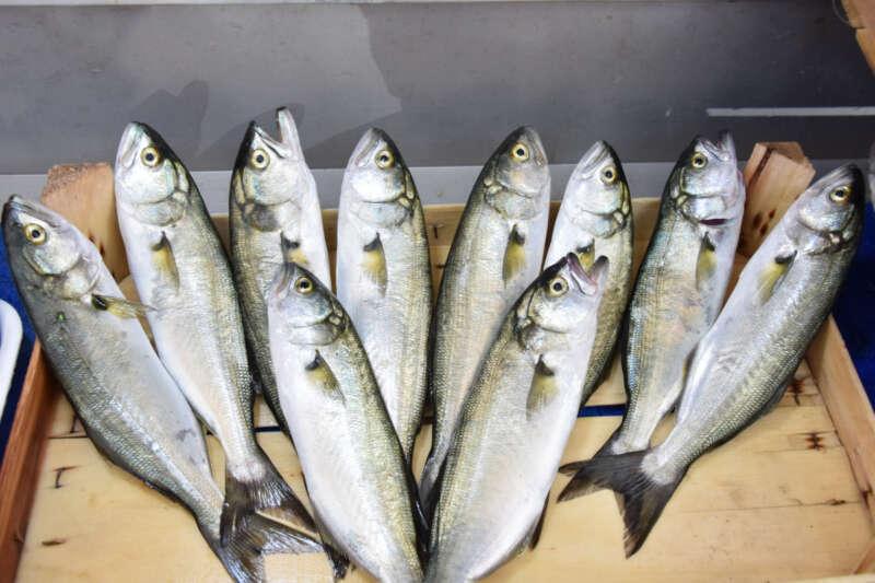 Çanakkale'de lüferin kilosu 150 lira